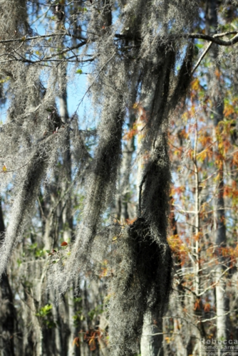 Who doesn't love Spanish moss?