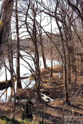 Neuse River bank.