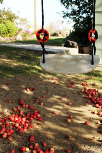 Crab apples fallen around a tree swing.