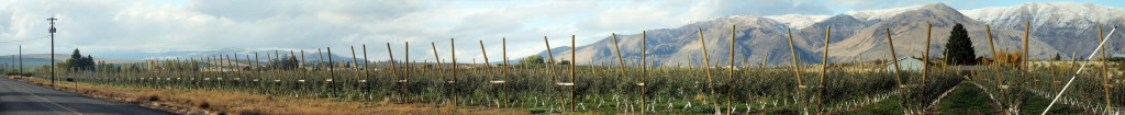 Panorama of a hops farm. Click twice for the biggest view!