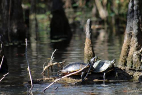 Turtles up close