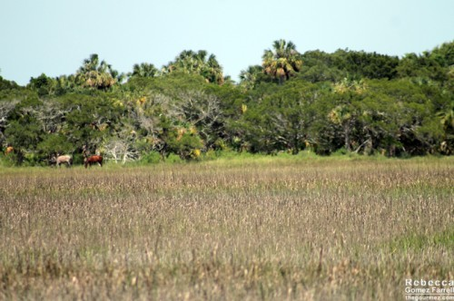 Left side of the photo. Hi, horsies!