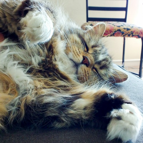 mazu cat becca gomez farrell fluffy hug
